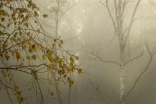 На поўначы, пад Паставамі, лес пагрузіўся ў густы туман. - Sputnik Беларусь