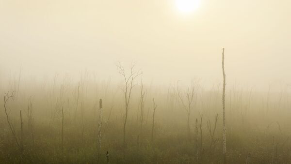 Туман і моцны вецер: штармпапярэджанне прадоўжылі ў Беларусі на два дні - Sputnik Беларусь