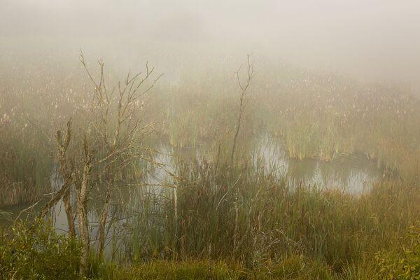 З першымі цёплымі прамянямі туман пачаў рассейвацца. - Sputnik Беларусь