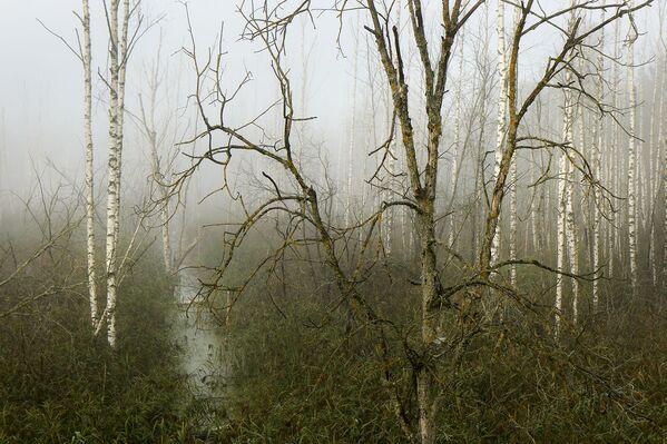 Туманны восеньскі лес вабіць сваёй загадкавасцю. - Sputnik Беларусь