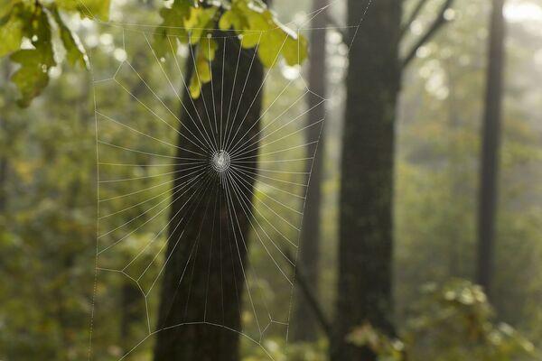 Геаметрыя павуцінкі. - Sputnik Беларусь