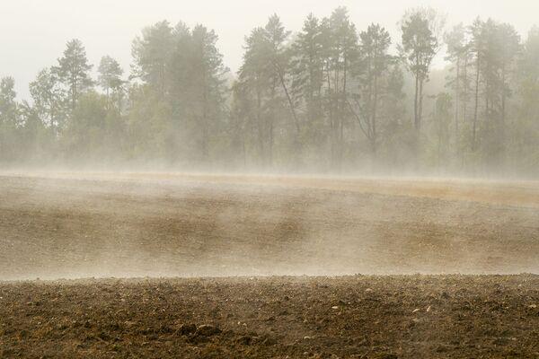 Туман каля лесу. - Sputnik Беларусь