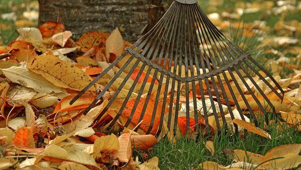 Осенью в саду немало работ - Sputnik Беларусь