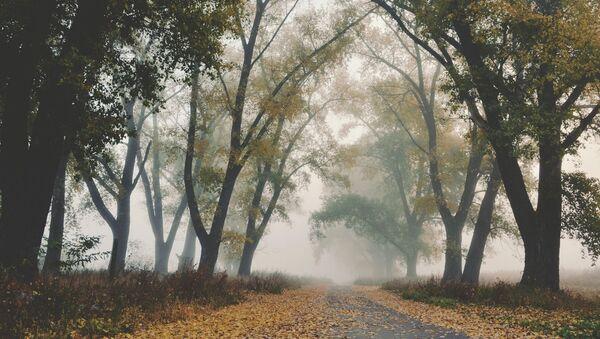 Восеньскі туман, архіўнае фота - Sputnik Беларусь