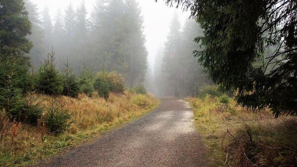 Восеньскі лес - Sputnik Беларусь
