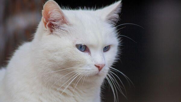 Белая кошка - Sputnik Беларусь