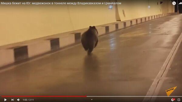 Медведь просочился через границу России и Южной Осетии по тоннелю – видео - Sputnik Беларусь