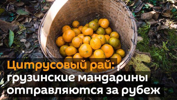 Час мандарынаў: як збіраюць зімовы ласунак беларусаў? - Sputnik Беларусь