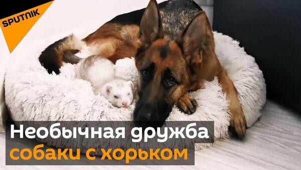 Тхор і аўчарка - Sputnik Беларусь