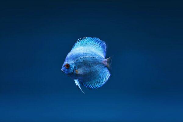 Рыбка - Sputnik Беларусь