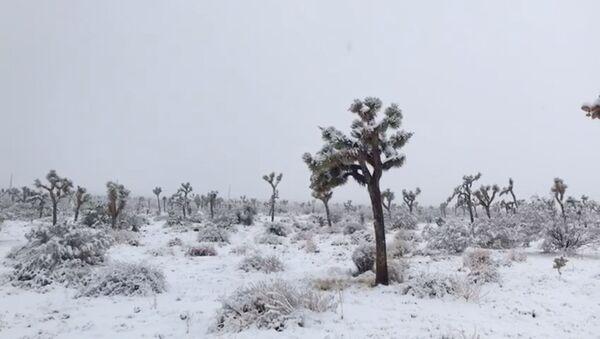 Снег в Национальном парке Джошуа-Три в Калифорнии - Sputnik Беларусь