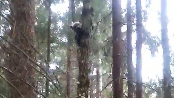 Белорусским медведям не спится - Sputnik Беларусь