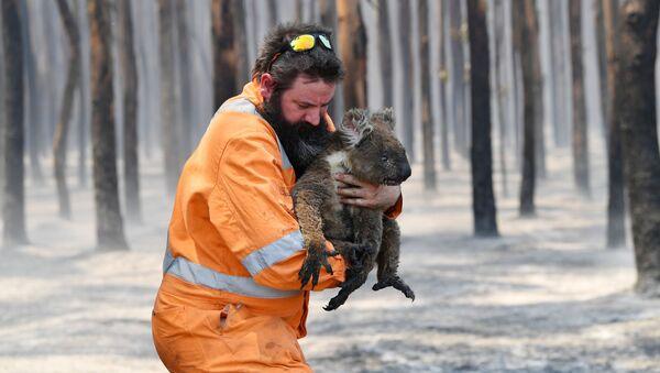Спасатель с коалой в Австралии - Sputnik Беларусь