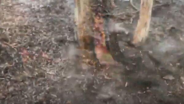 Ливни обрушились на регионы Австралии, которые пострадали от пожаров - Sputnik Беларусь