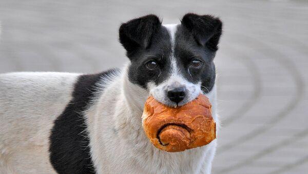 Бездомная собака в Ивацевичах - Sputnik Беларусь