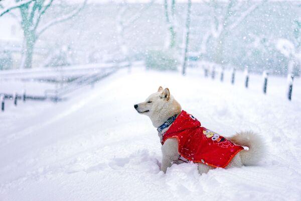 Собака искренне радуется зиме. - Sputnik Беларусь