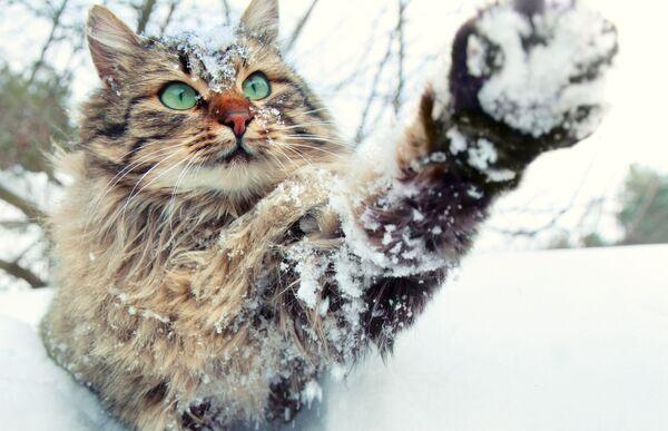 Кошка может не любить воду, но снег - это совсем другое. - Sputnik Беларусь