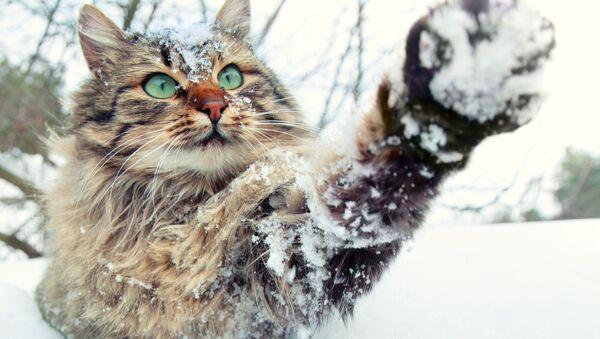 Кошка і снег - Sputnik Беларусь