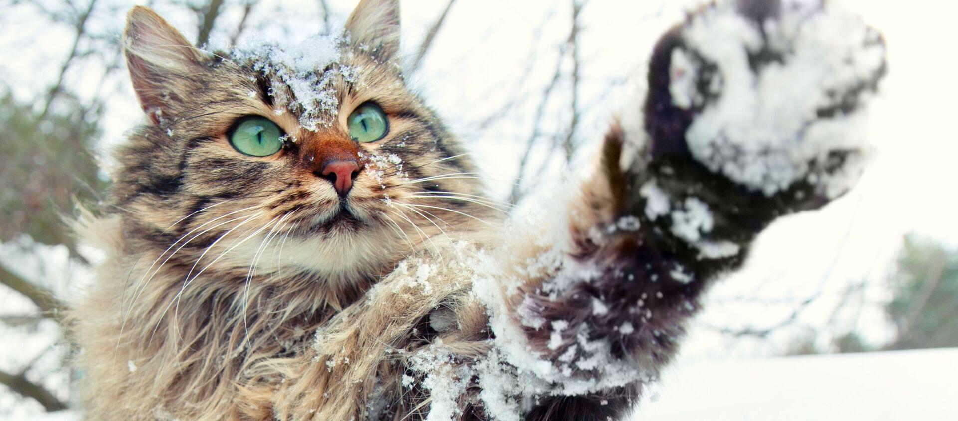 Кошка і снег - Sputnik Беларусь, 1920, 26.01.2021