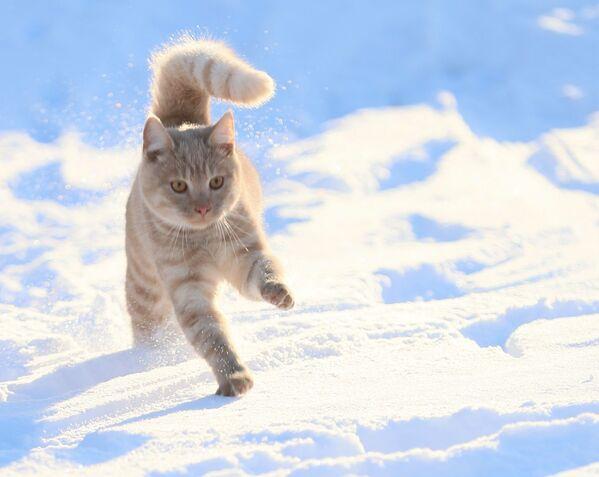 Кошку привычнее видеть у батареи, чем в снегу. - Sputnik Беларусь