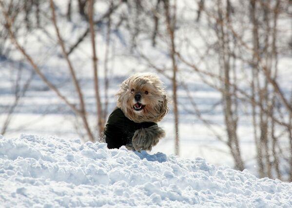 Пробежка по снегу. - Sputnik Беларусь