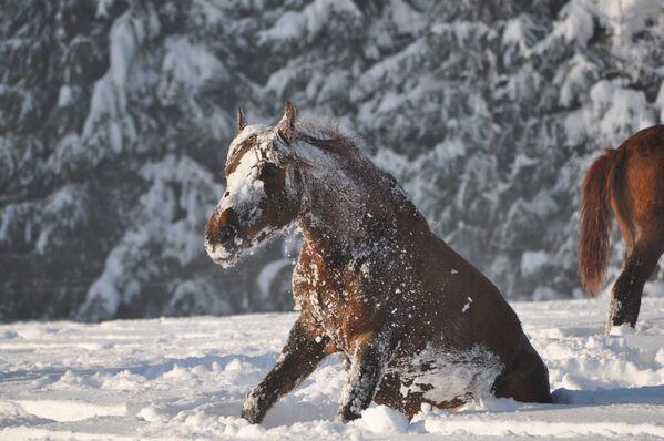 Лошадь на заснеженном поле. - Sputnik Беларусь