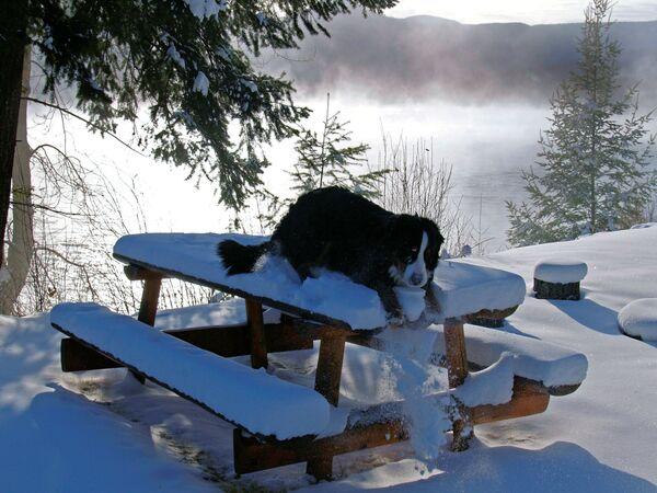 Наблюдать за снегом - особое удовольствие. Тем более, зимой можно взобраться и на стол. - Sputnik Беларусь
