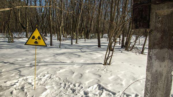Знак радиоактивной опасности в лесу - Sputnik Беларусь
