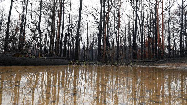 Залитый водой сгоревший лес в Австралии - Sputnik Беларусь