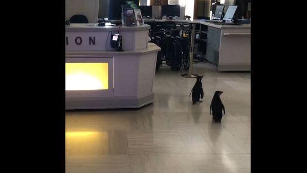 Пингвинам разрешили гулять по океанариуму в Чикаго и смотреть на рыб  - Sputnik Беларусь
