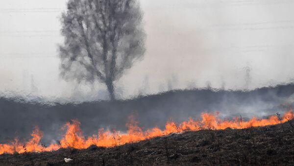 Сухая трава горит, архивное фото - Sputnik Беларусь