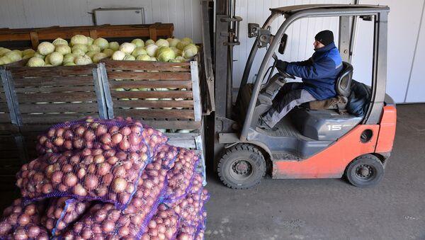 На овощных складах в УП Партизанское, архивное фото - Sputnik Беларусь
