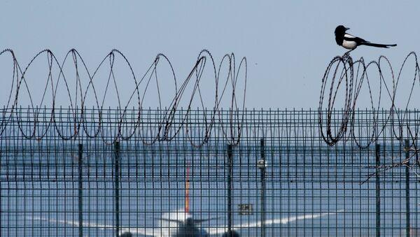 В международном аэропорту Пекина - Sputnik Беларусь