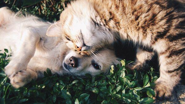 Кот и собака, архивное фото - Sputnik Беларусь