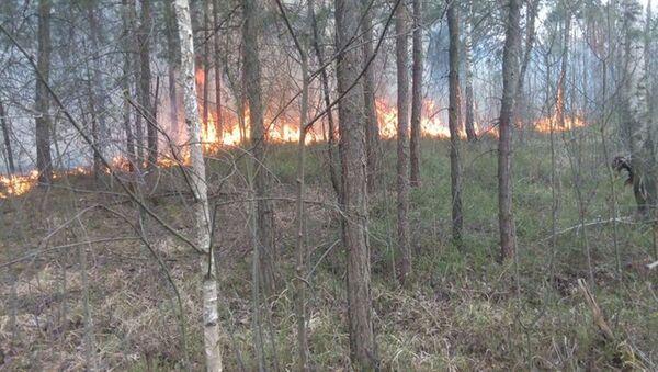 Пожар возле Бреста - Sputnik Беларусь