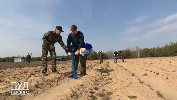 Президент Беларуси Александр Лукашенко сажает лес, видео - Sputnik Беларусь
