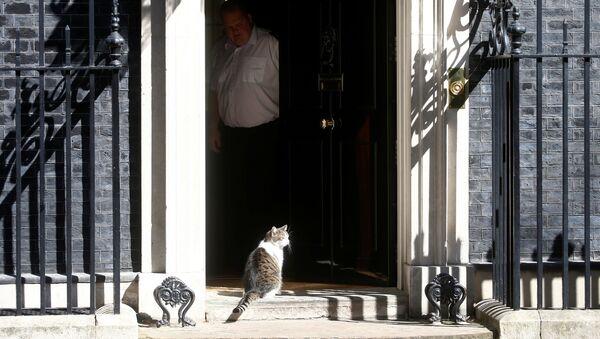 Кот Ларри у двери резиденции на Даунинг-стрит - Sputnik Беларусь