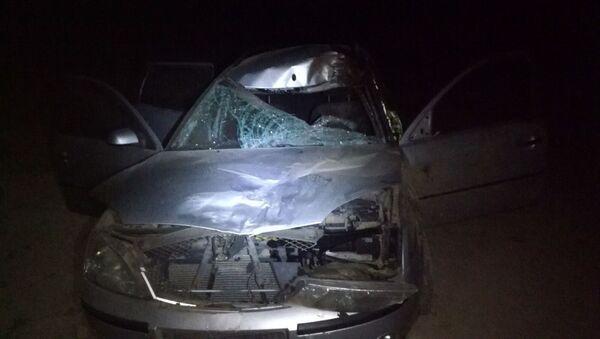 Ford сбил лося в Ошмянском районе - Sputnik Беларусь