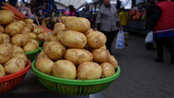 Молодой картофель пока найдется только российский и украинский - Sputnik Беларусь
