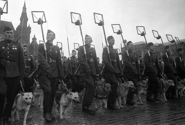 Минеры с собаками минно-разыскной службы на Параде Победы на Красной площади 24 июня 1945 года. - Sputnik Беларусь